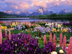 Breathtaking-Photo-of-Spring-in-Alaska