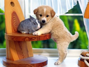 pets-wallpapers