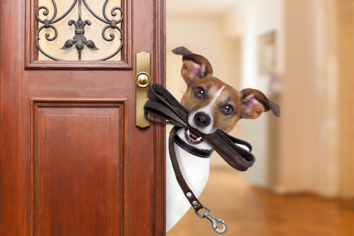 3 Ways You Can Help Your Pet Adjust to Your New Home